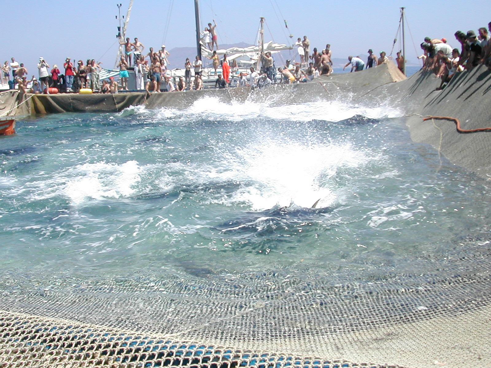 L'Area marina protetta delle Egadi istituisce un tavolo tecnico sulla tonnara di Favignana
