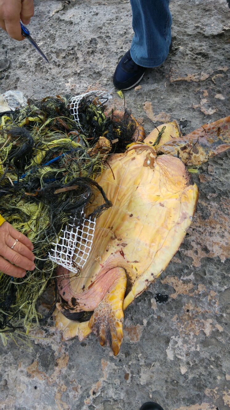 Non ce l'ha fatta la tartaruga recuperata ferita a Favignana