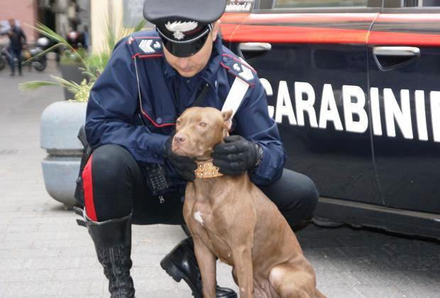 [Cc] Valderice, responsabili combattimenti tra cani: 2 obblighi di dimora