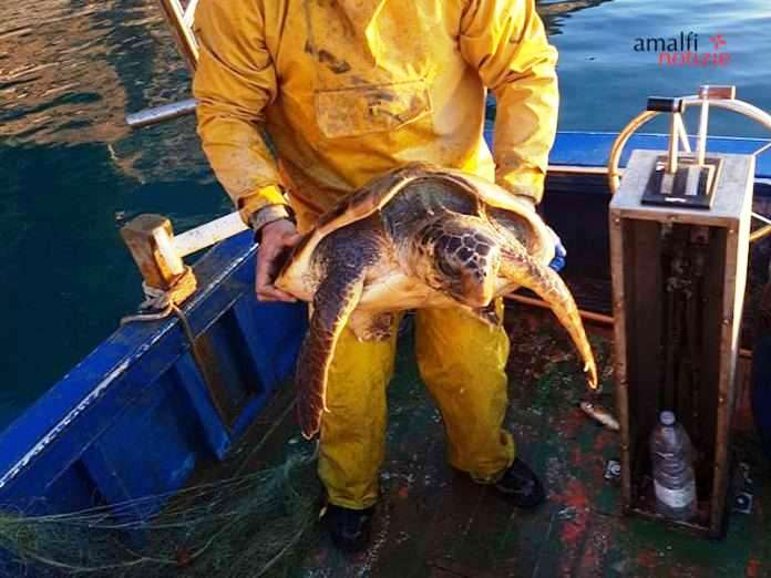 Tartaruga caretta – caretta si avvicina a peschereccio e si lascia accarezzare / Video