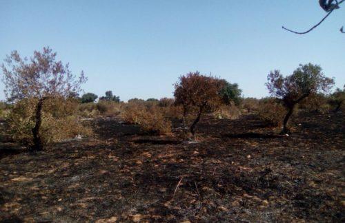 CASTELVETRANO. Un incendio, di probabile natura dolosa, ha bruciato un appezzamento di terreno confiscato alla mafia
